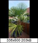 palme2ukp34.jpg